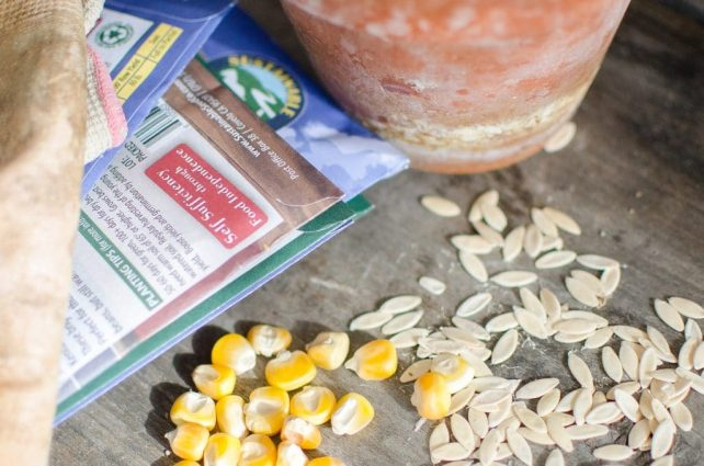 How to Save Extra Seeds