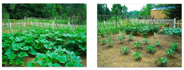~July's Garden~