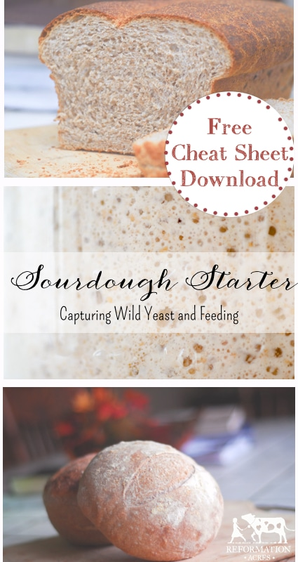 How To Capture Wild Yeast and Feed Sourdough Starter {Cheat Sheet}