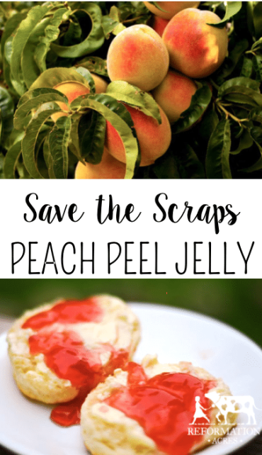 Don't throw away your scraps! Save the peach peels to make a delicious Peach Peel Jelly!