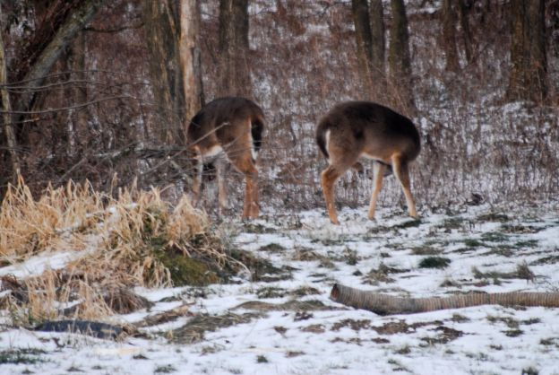 Aging Venison: How to Avoid Gamey Meat