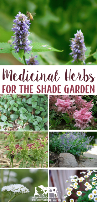 There are several, beautiful, easy-to-grow medicinal herbs that can be grown in the shade garden. These top 8 are among my favorite herbs to plant in shade.