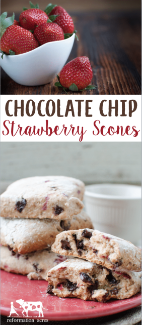 Chocolate Chip Strawberry Scones made with whole wheat flour is a wonderful way to use up frozen strawberries leftover from the early summer harvest.