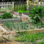 ~May's Garden~