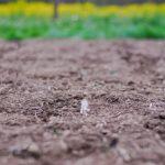 Back To Eden: One Gardener's Experience