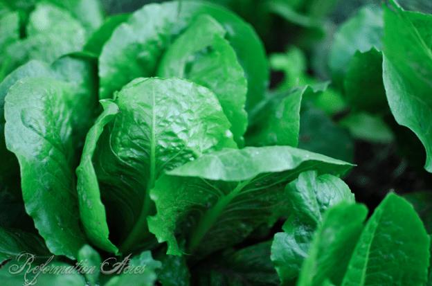 Should Organic Farmers Use Natural Sprays?