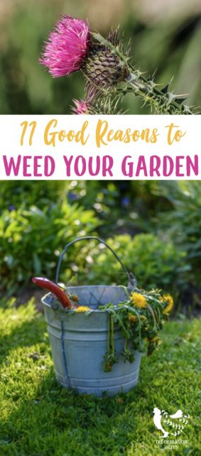 Pulling weeds can be a pain. Why pull weeds anyway? There are 11 good reasons to pull weeds in your garden before they cause bigger problems.