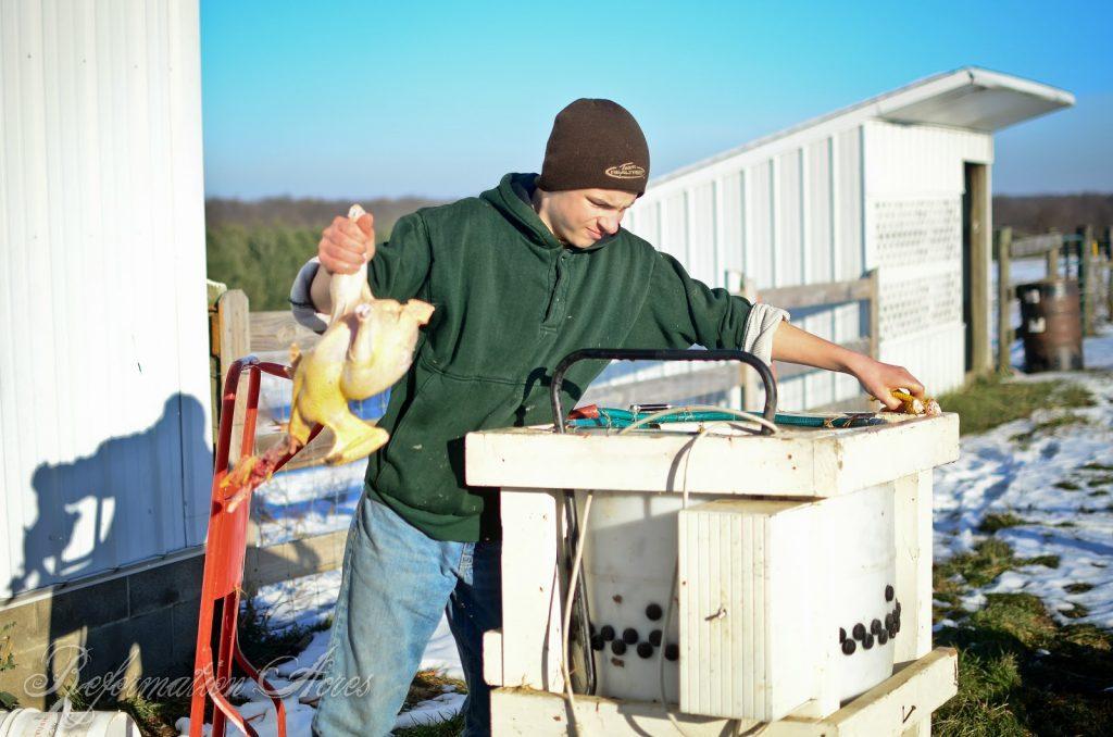 Homestead Chicken Butchering | onjustacoupleacres.blogspot.com-15
