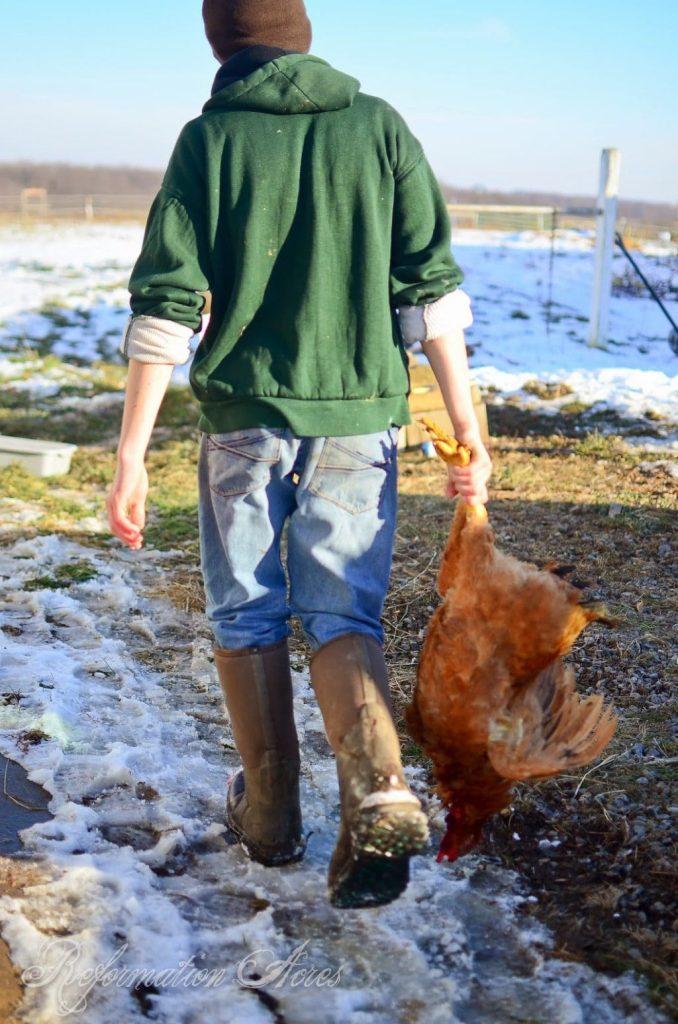 Homestead Chicken Butchering | onjustacoupleacres.blogspot.com-22