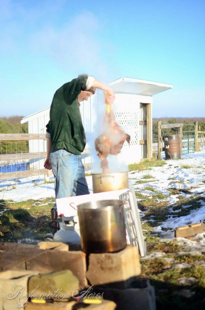 Homestead Chicken Butchering | onjustacoupleacres.blogspot.com-7