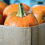 How to Puree Pumpkin and Winter Squash