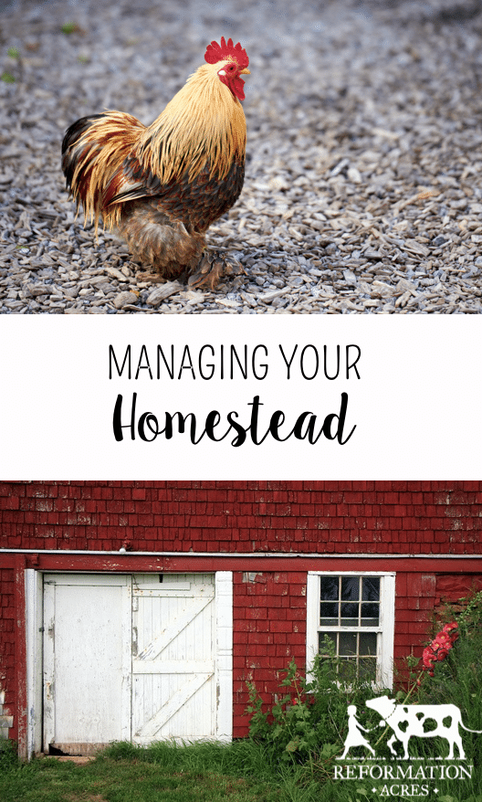 Tips for Managing Your Homestead