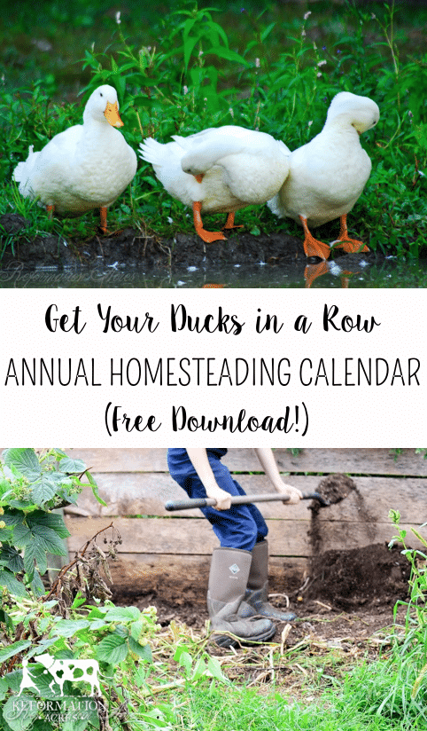 Get your ducks in a row! Create an Annual Homesteading Calendar to get your farm organized in the new year!