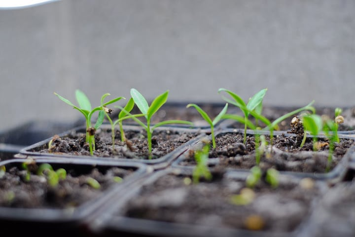 How to Quickly Start Your Garden Seeds in a Germination Chamber