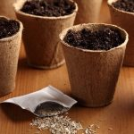 Seed Sowing Schedule {and a Template}