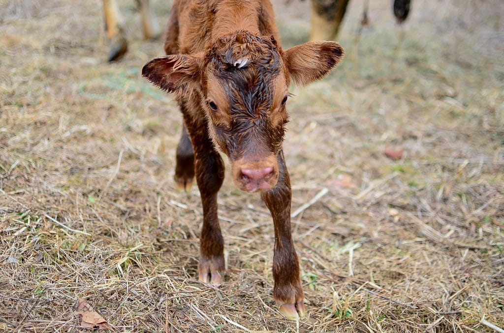 Holly's Birth Story (A Pasture Birth)