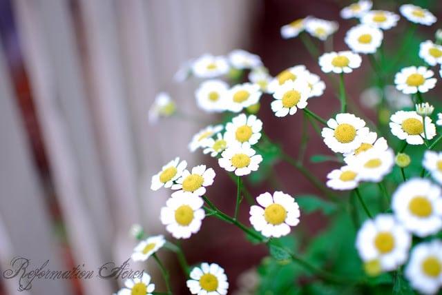 8 Medicinal Herbs for the Shade Garden