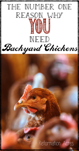 YOU need a few chickens in your backyard... here's the number one reason to get backyard chickens.