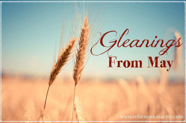 ~Gleanings From May~