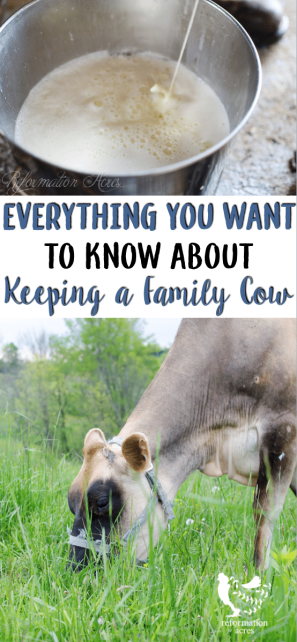 From costs, to how to pick the right cow, breeding, calving, milking, and more I'm going to walk you through the basics of keeping a family cow.