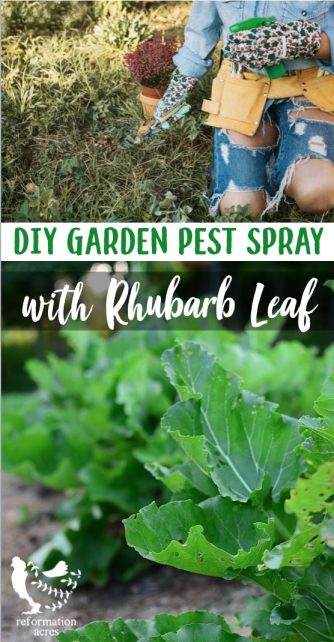 When it's either you or them, get rid of the bad bugs in your garden with an organic Rhubarb Leaf Pesticide Spray.