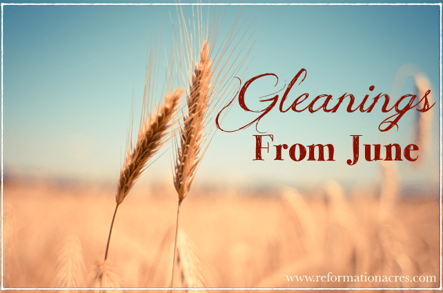 Gleanings from June {2014}