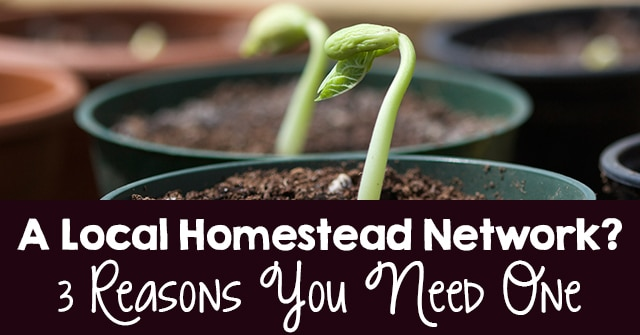 A Local Homestead Network? 3 Reasons You Need One