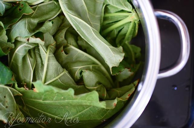 All-Natural, Organic Rhubarb Leaf Pesticide Spray