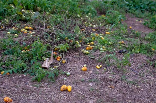 Pantry Garden-11