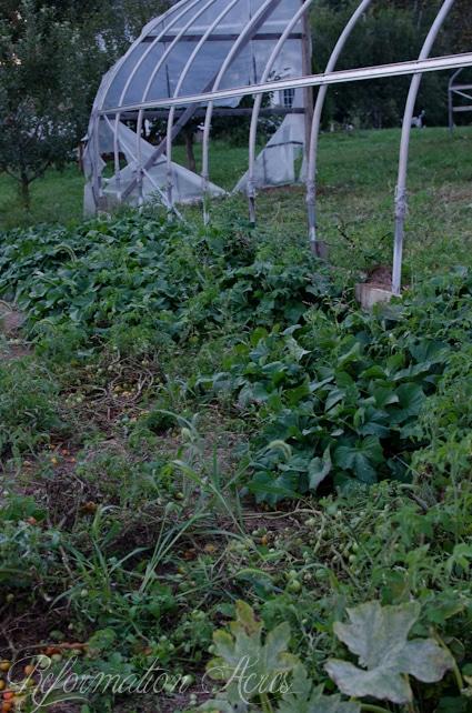 Pantry Garden-13