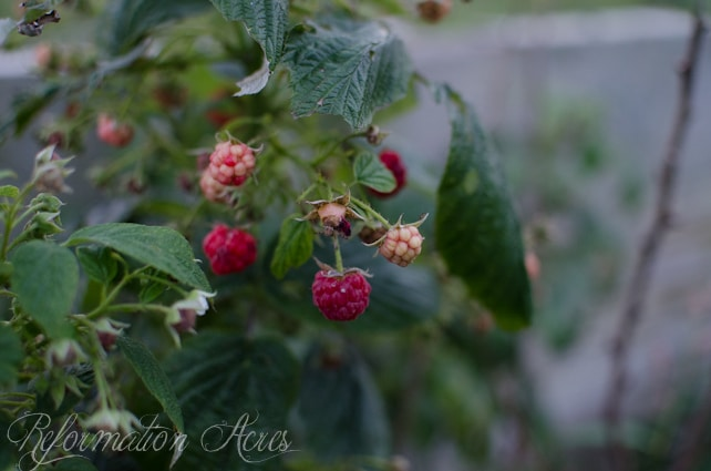 Pantry Garden-14