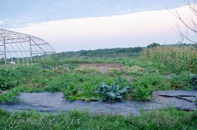 Pantry Garden