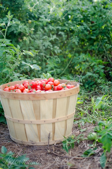 This is the BEST Garden Fresh Tomato Sauce (It's SO easy, makes a ton, and it has canning instructions!)