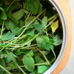 Homemade Medicine Made Simple: Jewelweed {The Anti-Itch Plant}