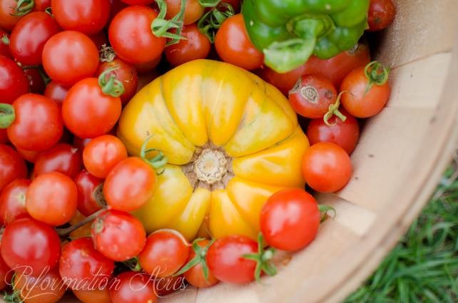 garden tomatoes-2