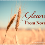~Gleanings from October & November~