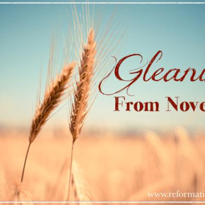 ~Gleanings from October & November~