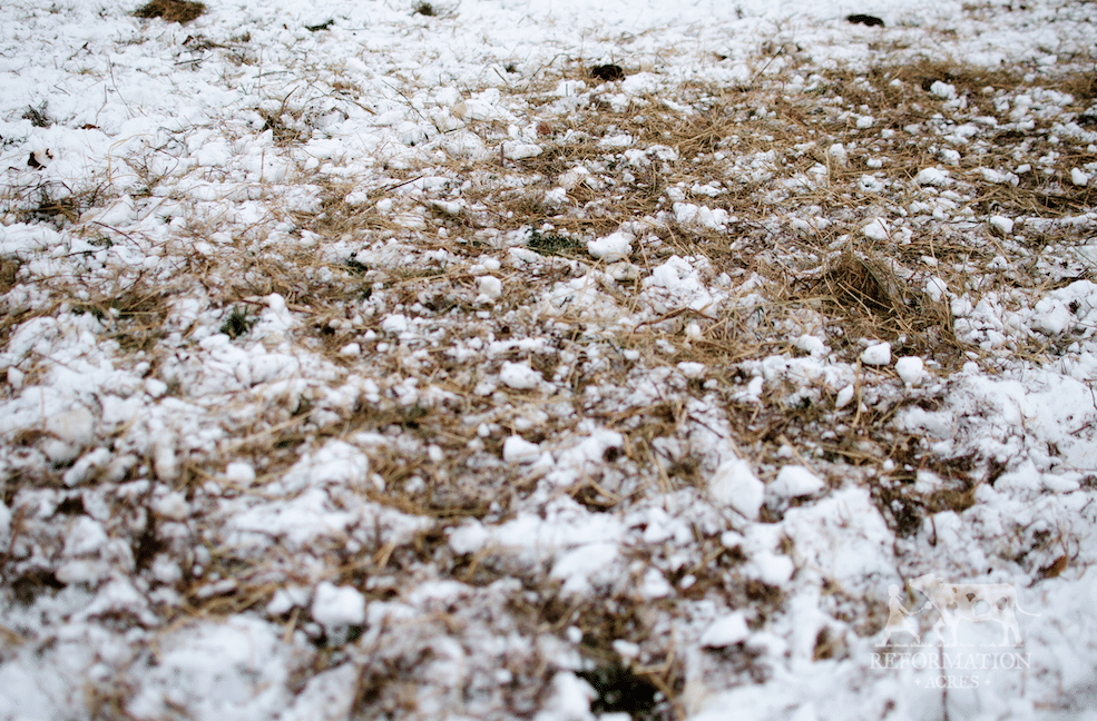 How to Reseed Your Pasture This Winter (For Free)