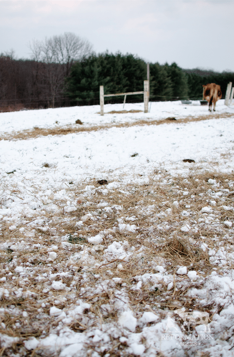 How to Improve & Reseed Your Pasture This Winter (For Free)