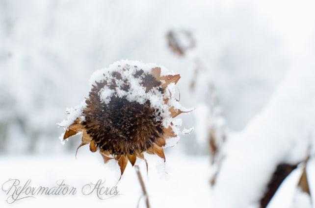 Winter Reading on the Homestead (December)