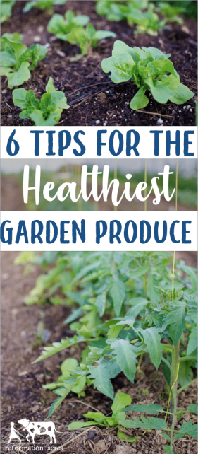 Garden fresh is best! Right? Even fresh isn't good enough if the unhealthy plant is producing unhealthy produce. Use these 6 Garden Tips for the HEALTHIEST Garden Produce!