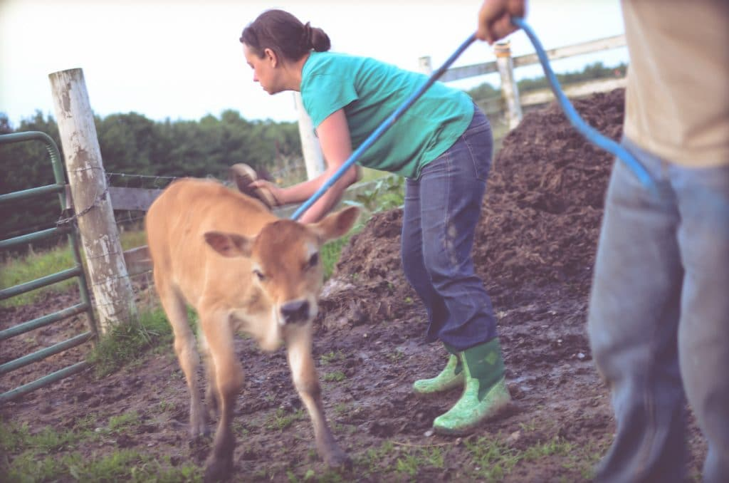 Day in the Life of a Homesteader-148