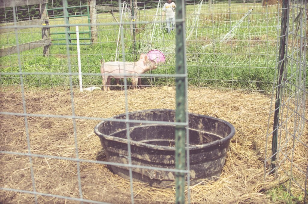 Day in the Life of a Homesteader-55