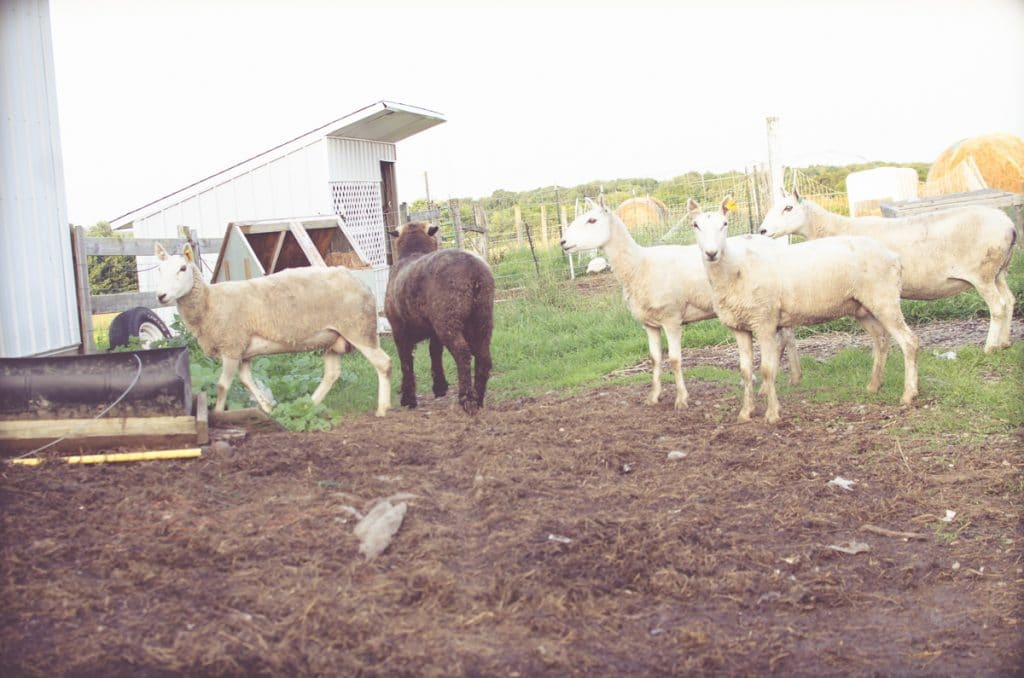 Day in the Life of a Homesteader-94