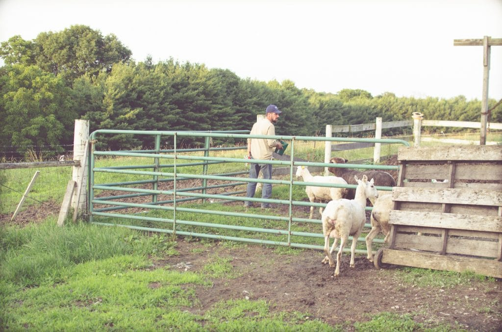 Day in the Life of a Homesteader-98