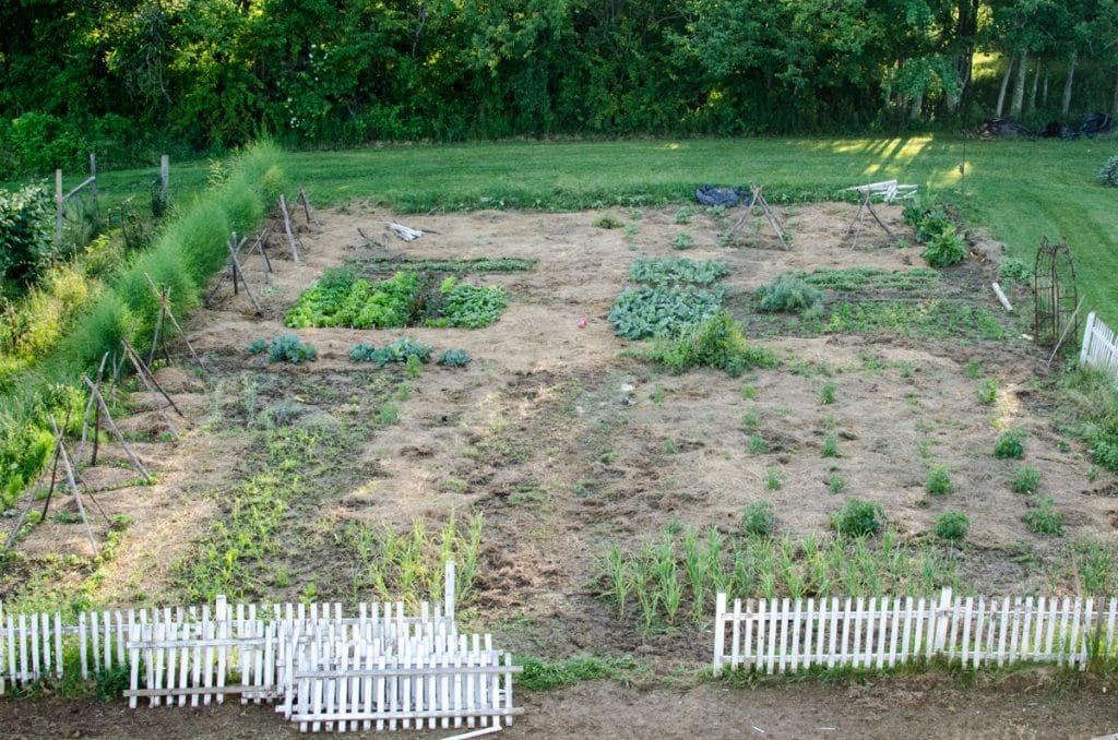 June 2015 Kitchen Garden