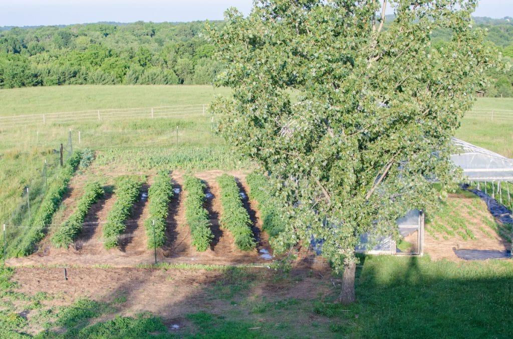 June 2015 Pantry Garden