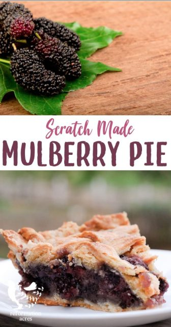 What could be a better way to use mulberries than in a sweet and spicy mulberry pie? You'll look forward to mulberry season every year.