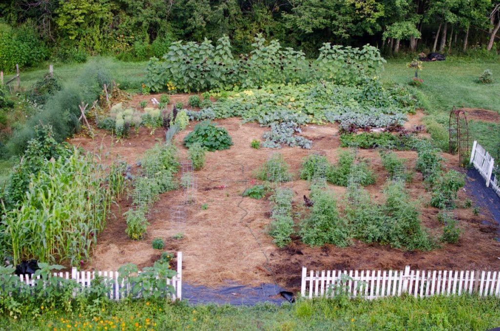 Kitchen Garden mid-August 2015