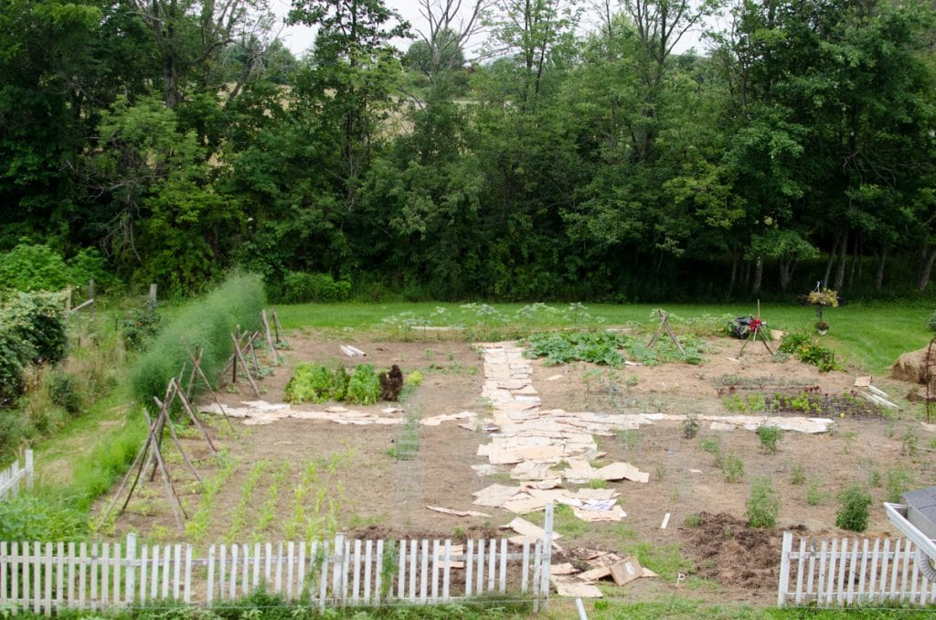 Kitchen Garden- 1st Week of July 2015